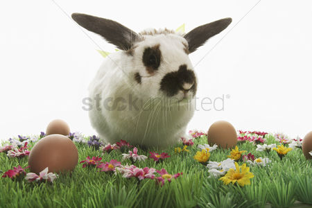 Grass background : Rabbit with bows on easter meadow