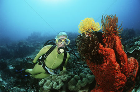 Diving : Raja ampat indonesia pacific ocean female scuba diver swimming by coral reef