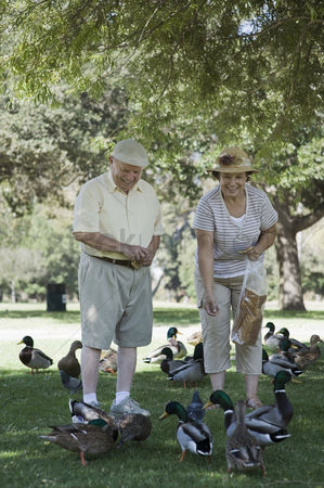 Large group of animals : Senior couple feeding ducks