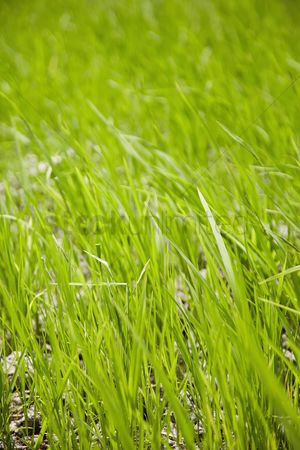 Grass background : Shot of a grass covered field