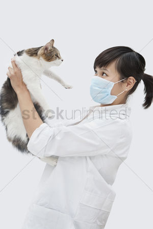 Domesticated animal : Side view of female veterinarian holding up cat against gray background