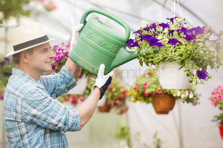 Greenhouse : Side view of middle-aged man watering flower plants in greenhouse