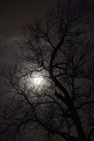Moody : Silhouette of trees in the moonlight