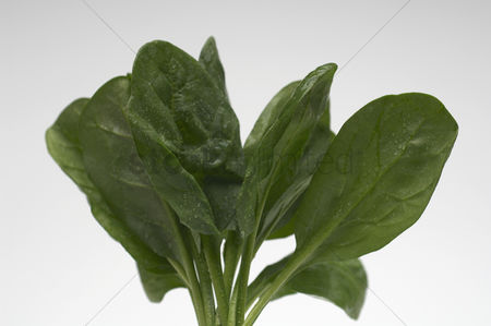 Leaf : Spinach leaves