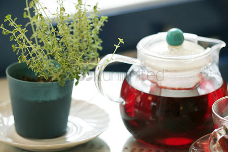 Tea pot : Thyme in a pot next to a tea pot
