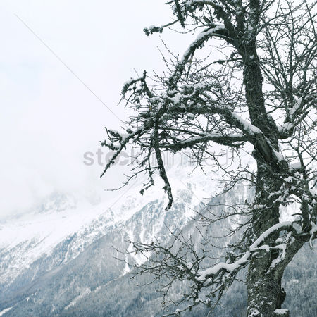 Cold : Tree branches covered with snow