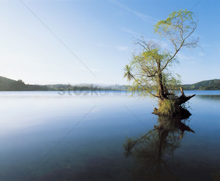 Landscape : Tree reflecting on still water of lake