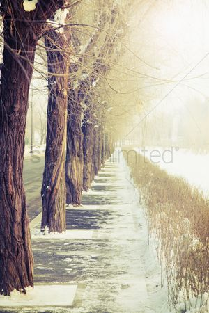 Cold temperature : Trees along the roadside during winter