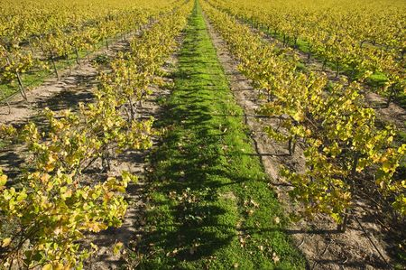 Land : Vineyard in santa maria california