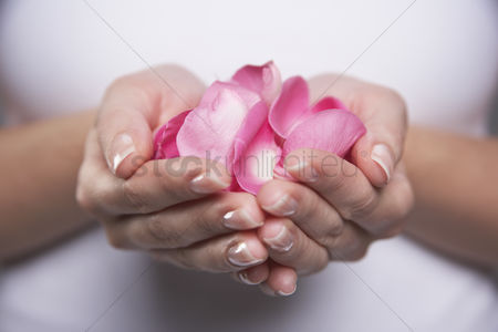 Pink : Woman cupping hands full of petals mid section close-up