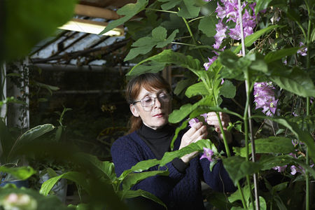 Greenhouse : Woman examining flowers