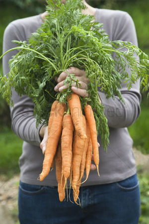 Garden : Woman holding bunch of carrots mid section