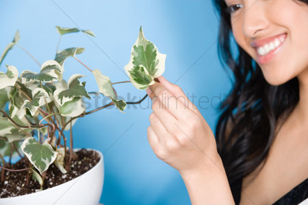 Houseplant : Woman looking at leaf