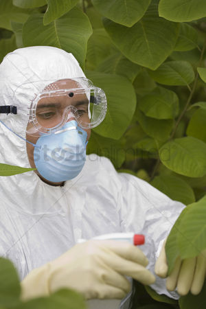 Greenhouse : Worker in protective mask and suit spraying plants