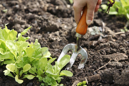 Outdoor : Working with spading fork in community garden