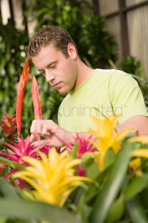 Greenhouse : Young man looking at exotic potted plants in greenhouse